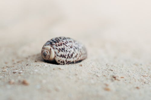 Free stock photo of sea shell