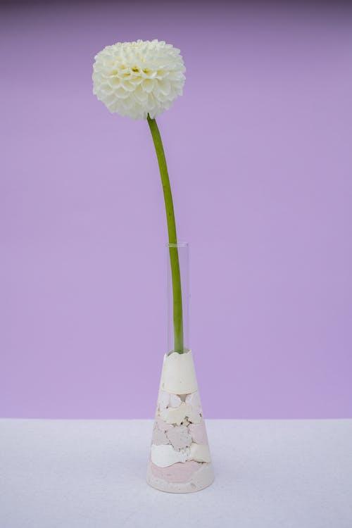 Gratis arkivbilde med blad, blomst, delikat
