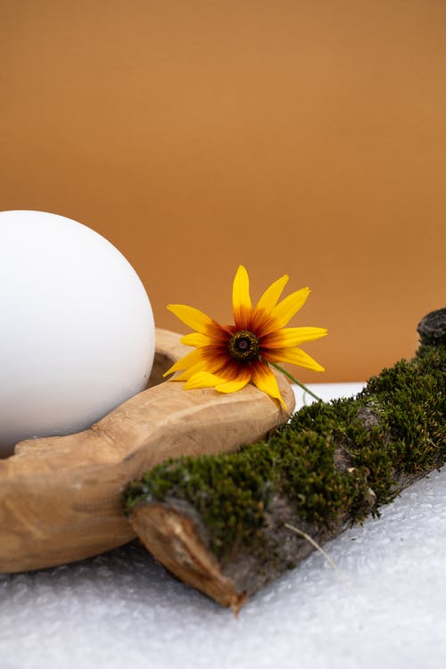 Gratis arkivbilde med blad, blomst, egg