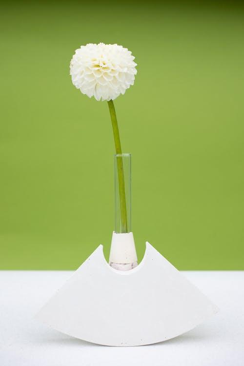 Gratis arkivbilde med blad, blomst, flora