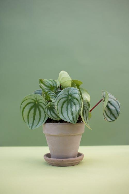 Gratis arkivbilde med blader, botanisk, dekorativ