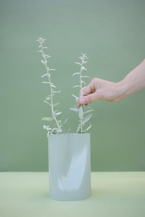 Gratis arkivbilde med blad, blomst, container