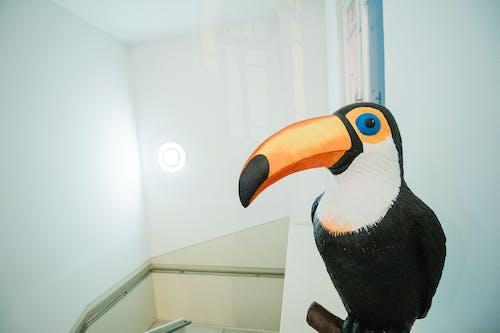 Free stock photo of papier mache, toucan