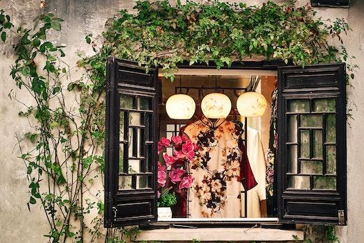 Free stock photo of 植物, 窗户, 灯光, 街拍