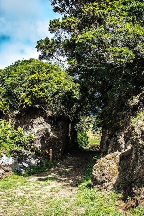 Gratis stockfoto met Bemoste rotsen, berg, bloemen, bomen