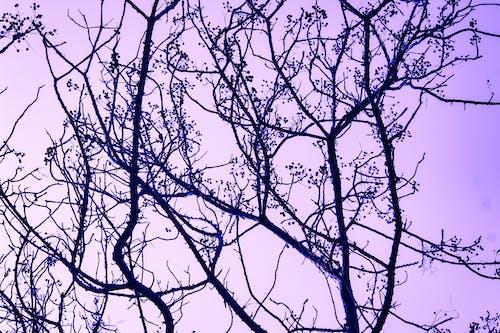 Gratis stockfoto met bomen, bossen, dageraad, morgenstond