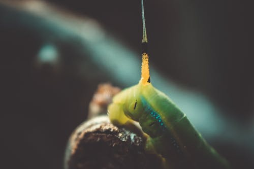 Free stock photo of caterpillar, close-up, insect