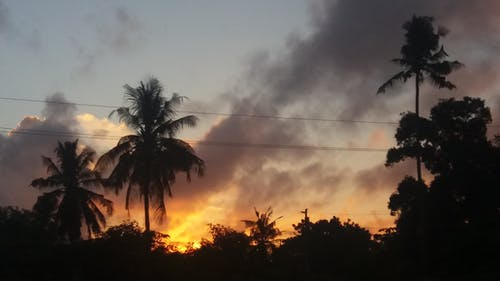 Fotobanka sbezplatnými fotkami na tému kokosové palmy, mbagala kweli, východ slnka, zlaté slnko