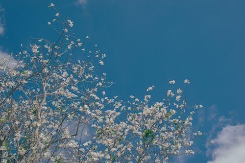 Foto profissional grátis de árvores, aumento, brilhante, céu azul