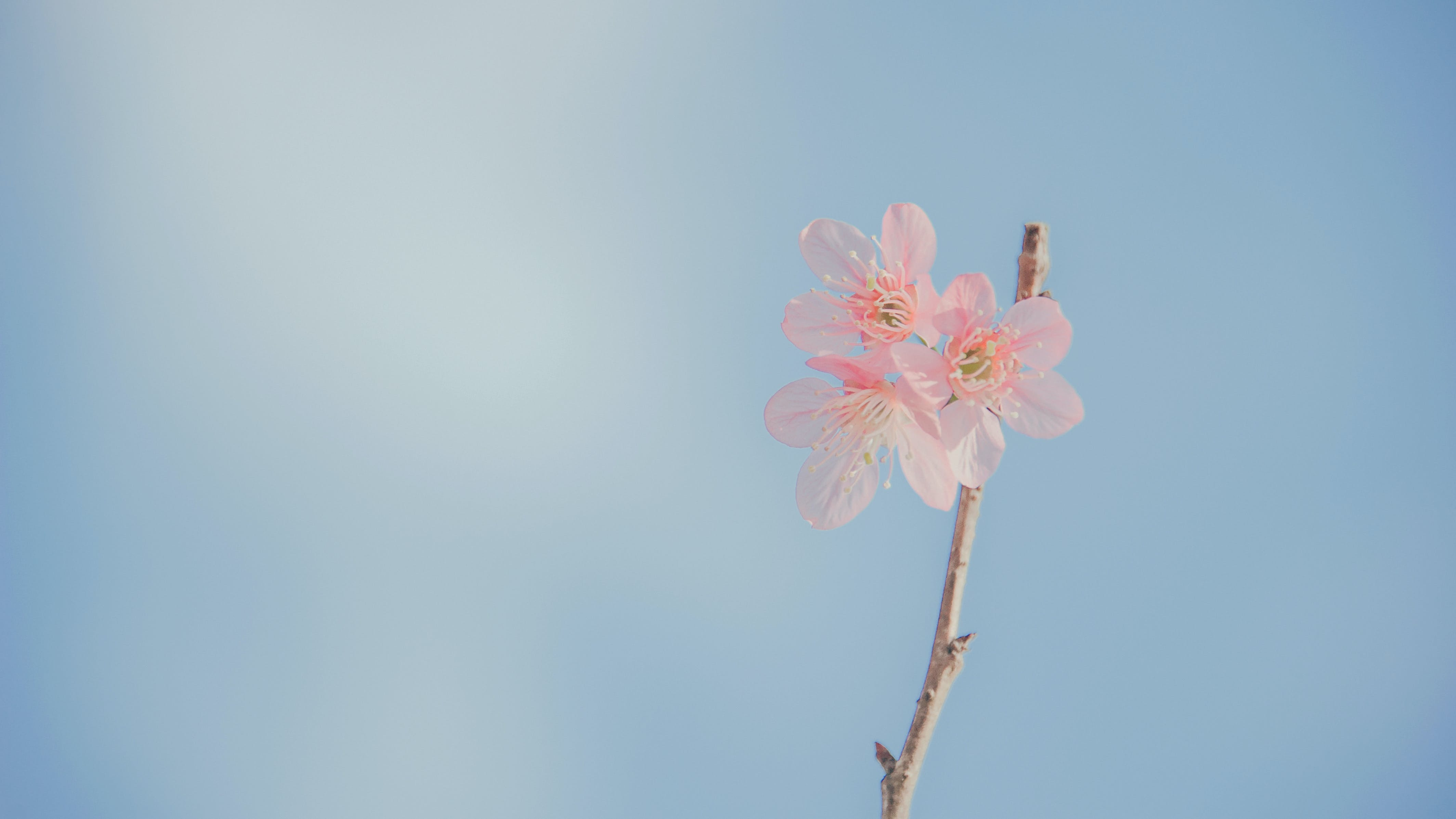 Landscape Photography of Pink Petaled Flowers