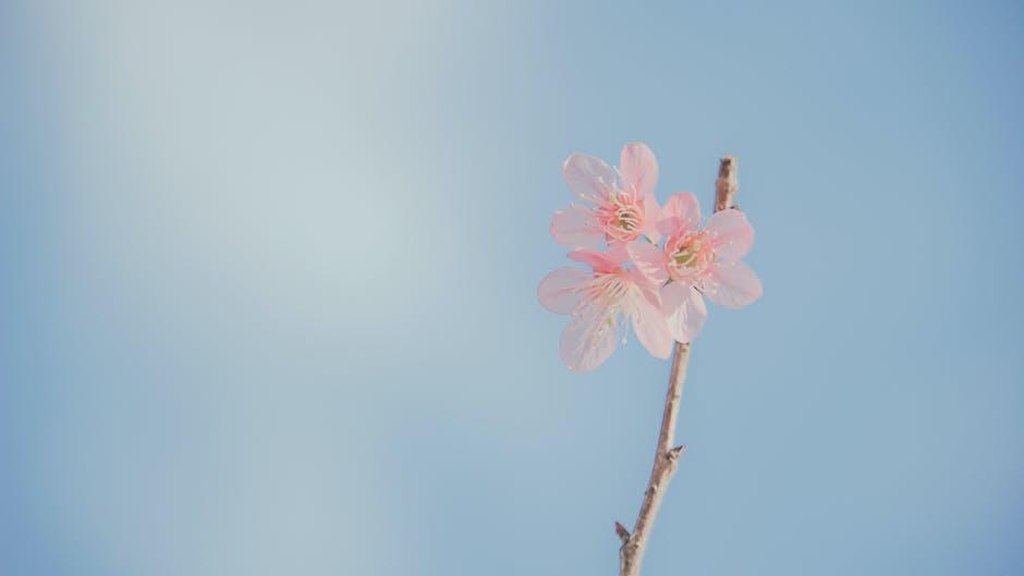 Landscape photography of pink petaled flowers