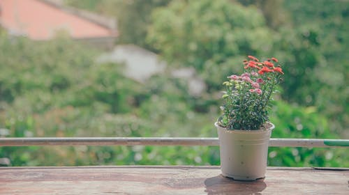 Pot of Flowers Near Balcony