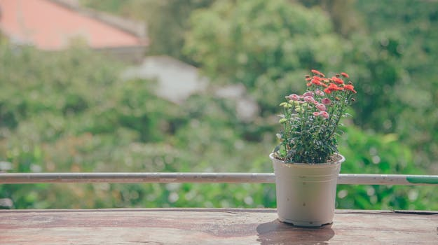 Pot of Flowers Near Balcony