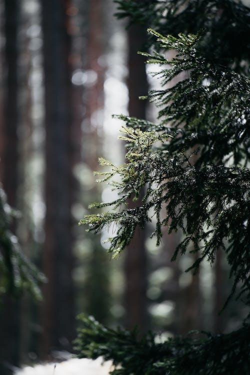 冬季, 冷, 分公司 的 免费素材图片