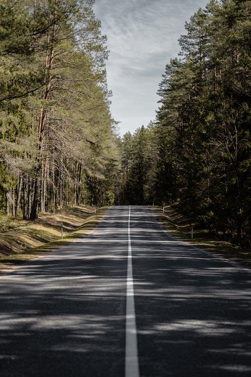 Foto stok gratis bimbingan, jalan aspal, jalan raya