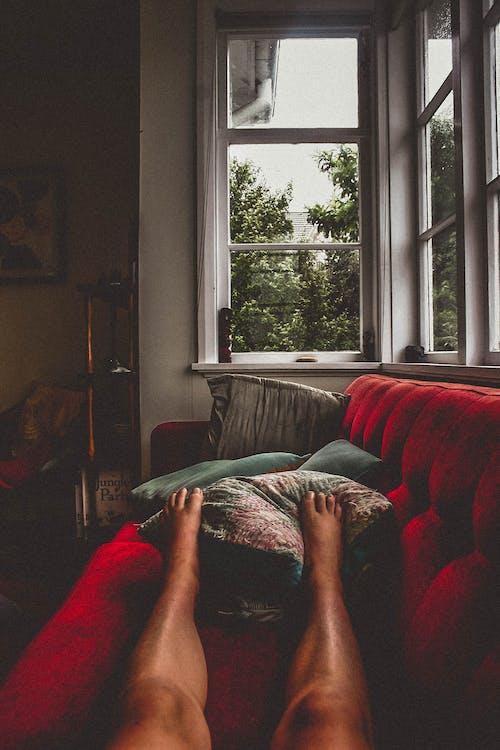 Fotos de stock gratuitas de pata, patas, pies, sofá