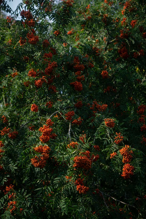 Red and Green Flower Plants