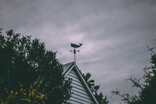 Fotos de stock gratuitas de arboles, ballena, cielo, cielo nublado