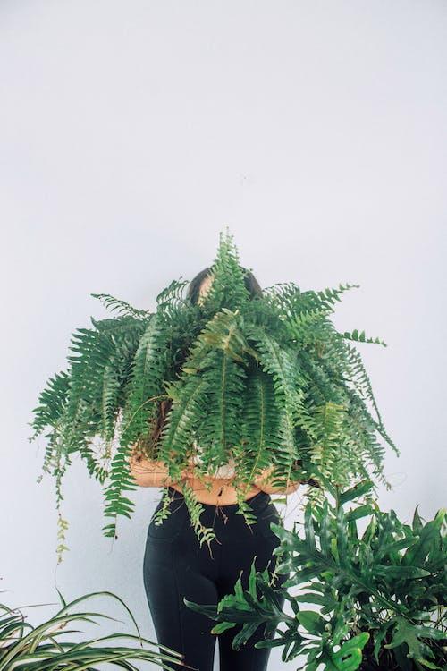 Imagine de stoc gratuită din anonim, ascunzând fața, botanic