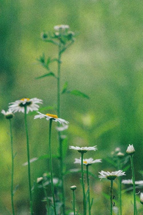 Imagine de stoc gratuită din câmp, câmp de fân, câmp de flori