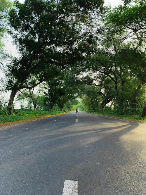 Person Walking On Gray Asphalt Road Between Green Trees