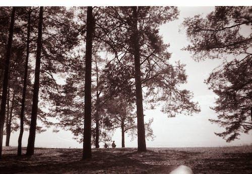 Darmowe zdjęcie z galerii z 35 mm, czarno-biały, drewno