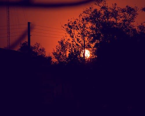 在树后面的日落 的 免费素材照片