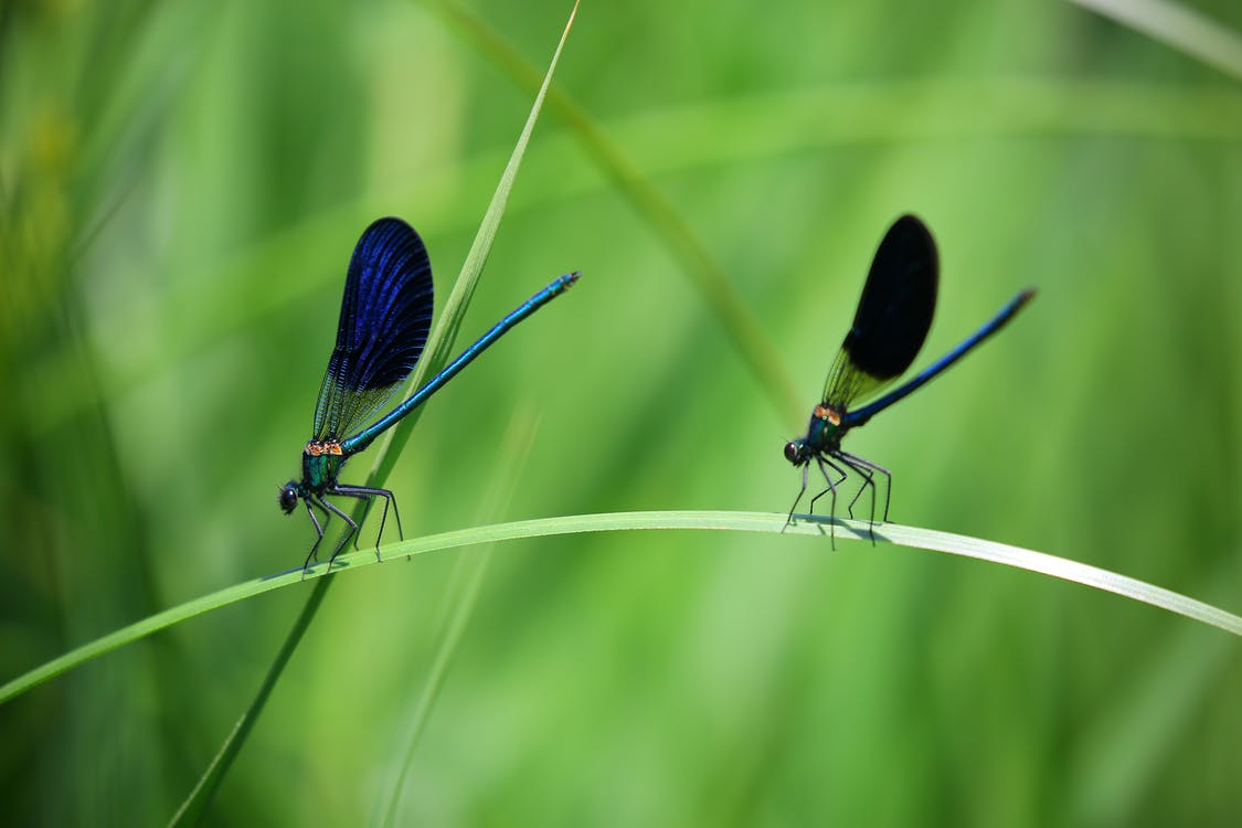 Blue Green and Black Dragonfly on Green Grass