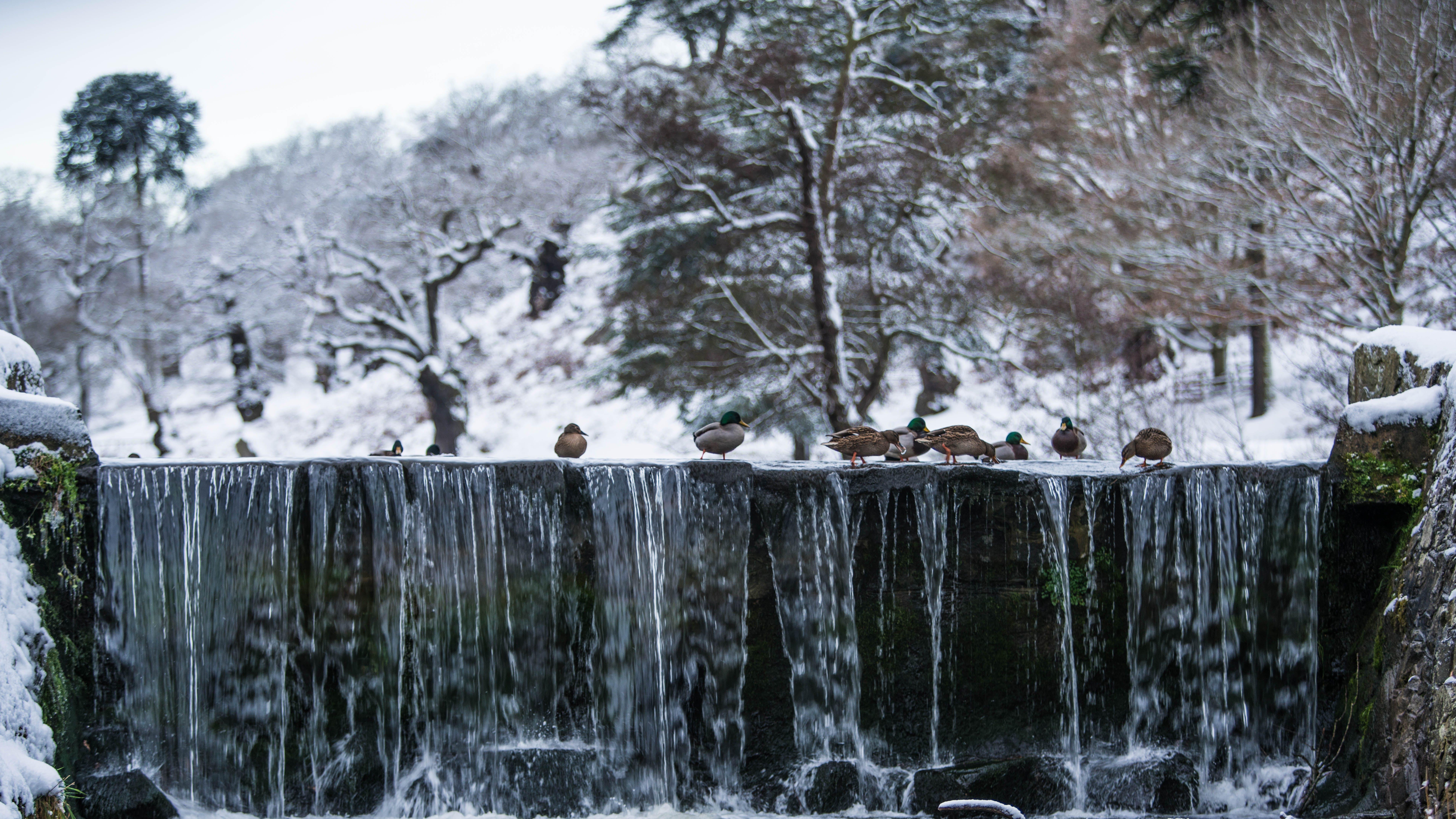 Birds Above Waterfalls
