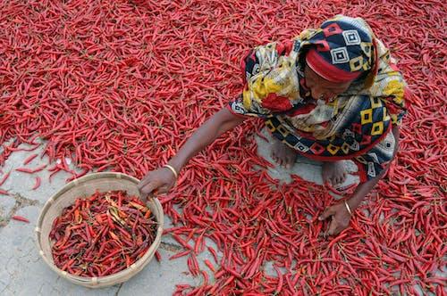 Základová fotografie zdarma na téma chili, šátek, žena