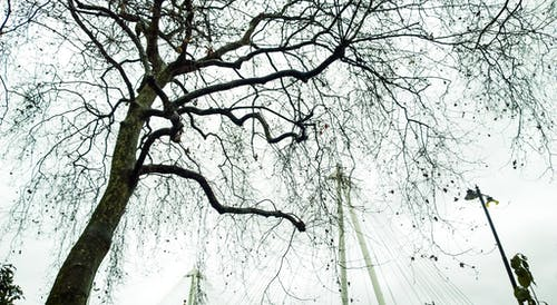 倫敦, 冬季, 樹木, 黑與白 的 免費圖庫相片