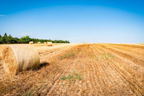 Безкоштовне стокове фото на тему «вид, горизонт, ґрунт»