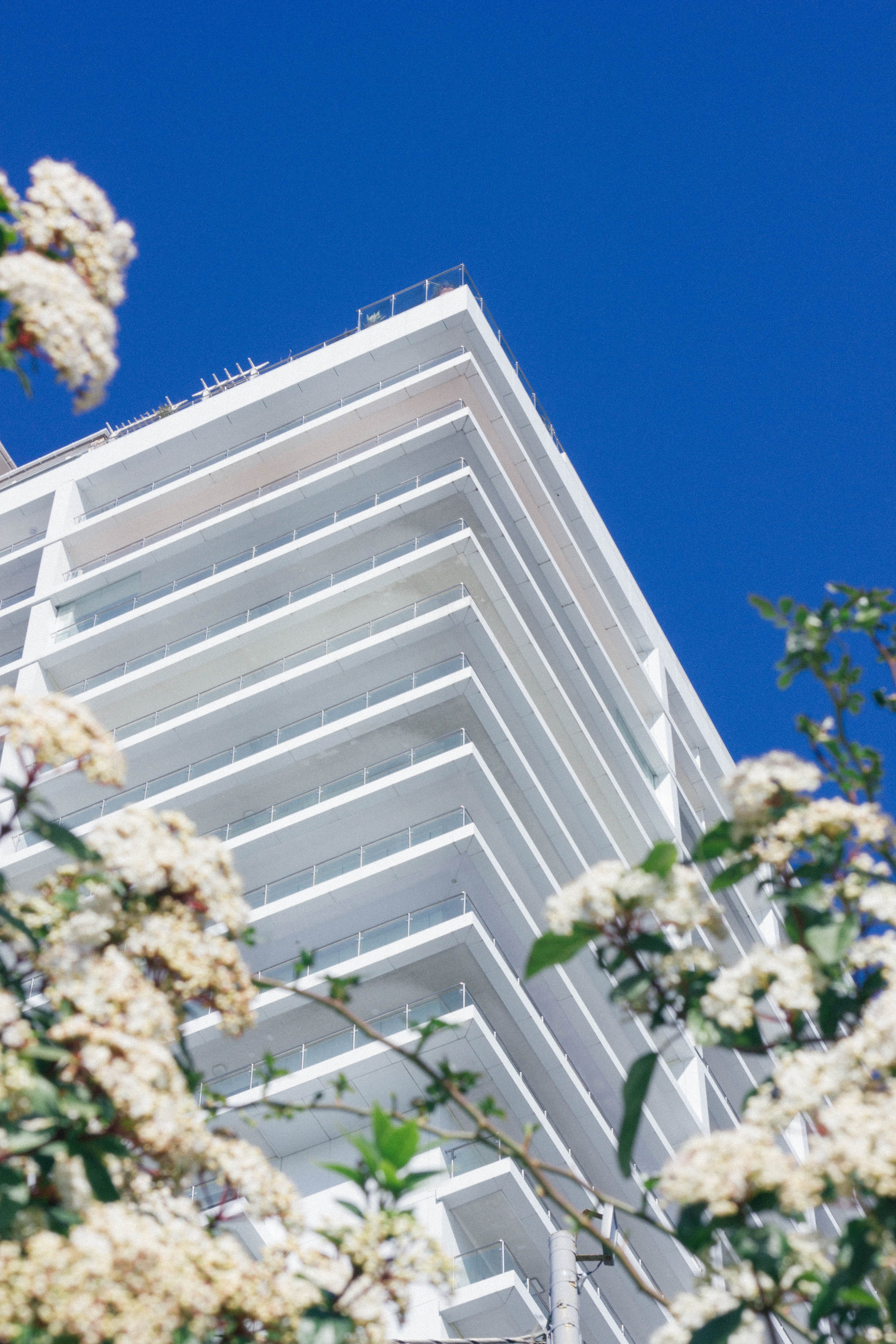White Cherry Blossoms Beside High-rise Building