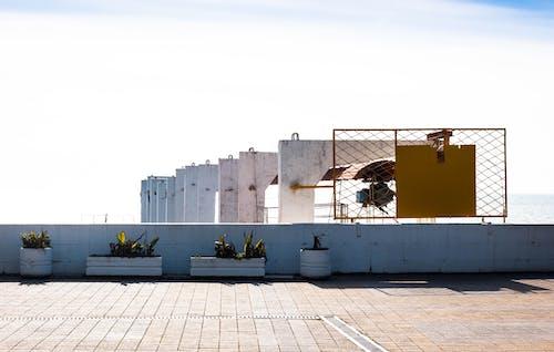 Безкоштовне стокове фото на тему «залізобетонна конструкція, кімнатні рослини, конструкція, контейнер для вирощування саджанців»