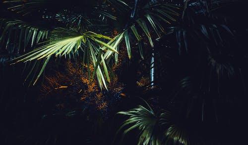 คลังภาพถ่ายฟรี ของ ต้นปาล์ม, ธรรมชาติ, ป่าฝน, ปาล์ม