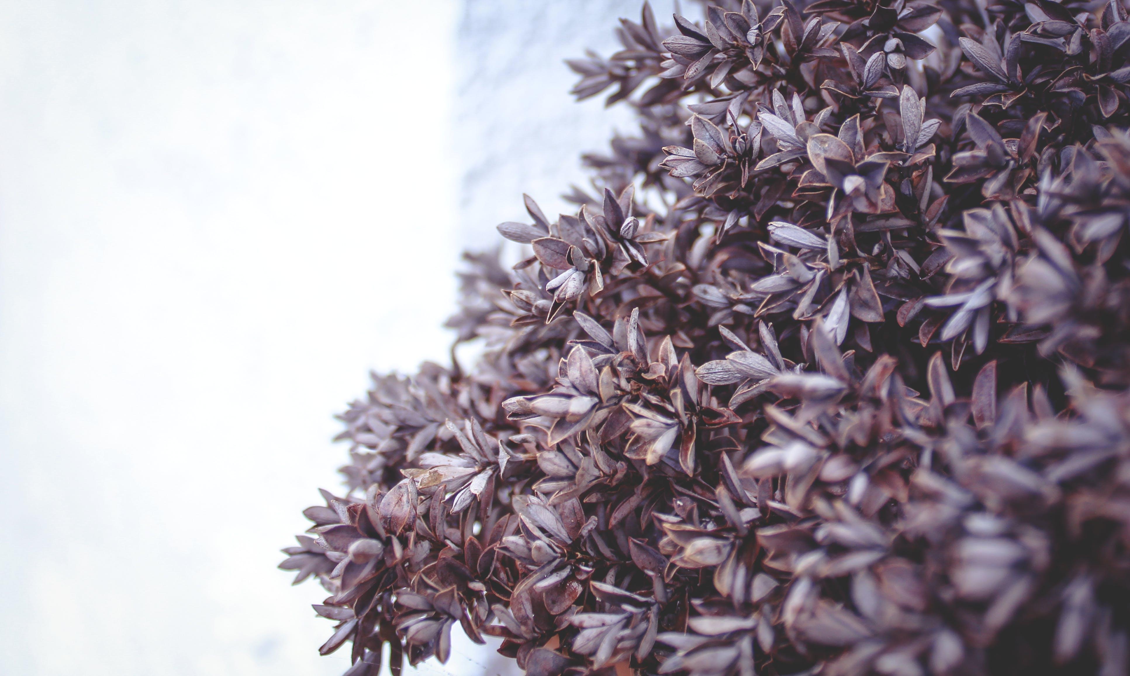 Ilmainen kuvapankkikuva tunnisteilla kasvi, puu