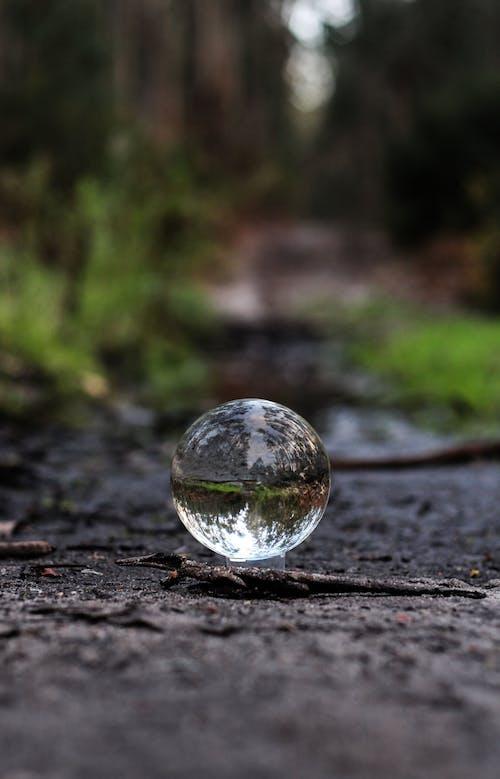 Kostenloses Stock Foto zu ball, dschungel, glas, glaskugel