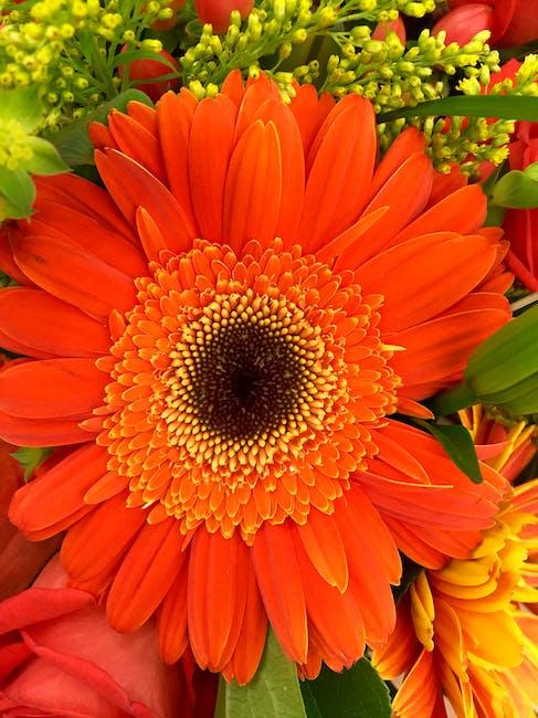 Nature spring orange flower