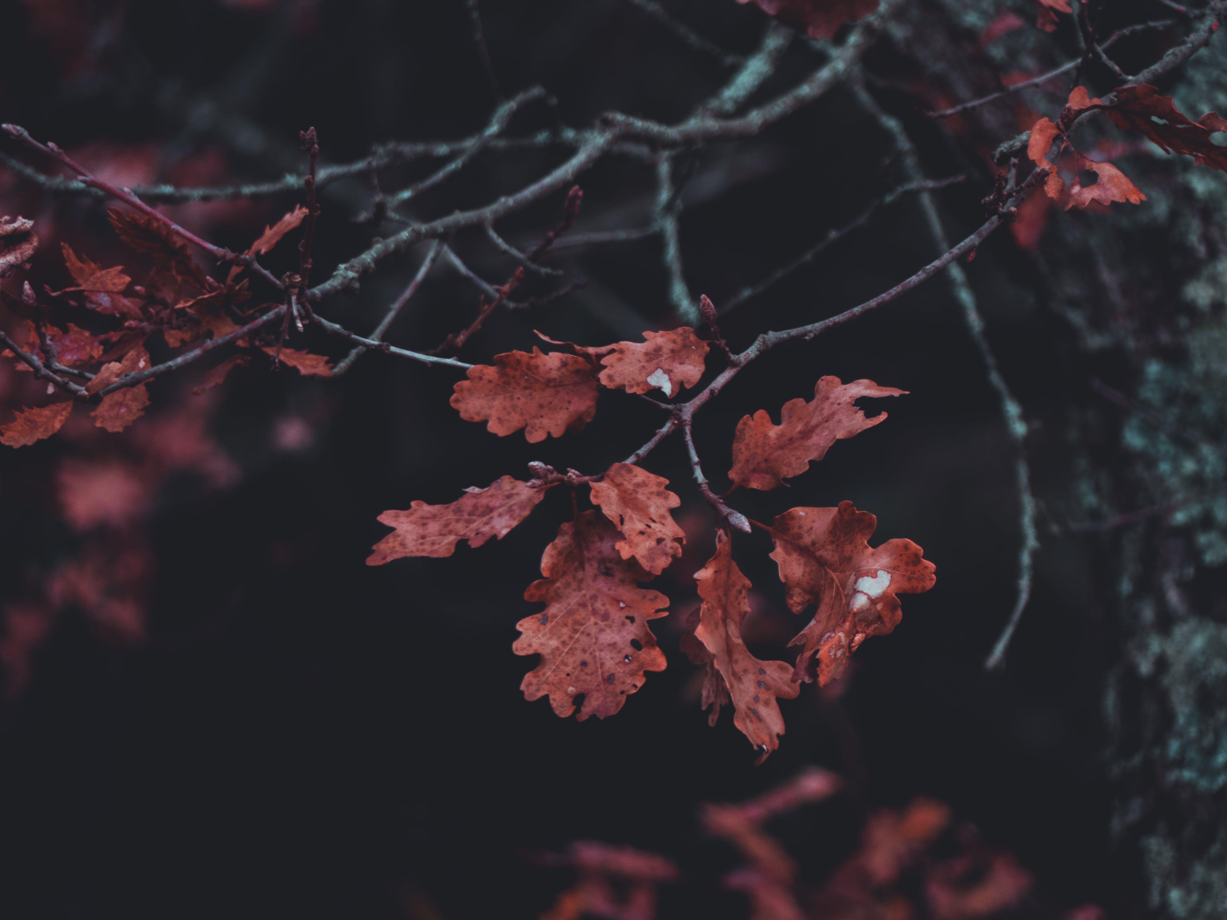 가지, 식물의 무료 스톡 사진