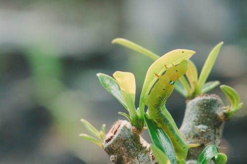 Free stock photo of caterpillar, dark green, loifotos