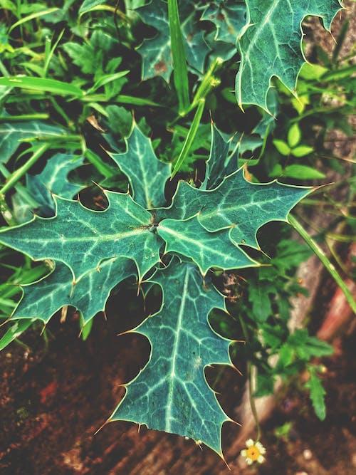Immagine gratuita di cespugli, natura meravigliosa, pianta di cactus