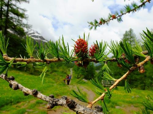 Безкоштовне стокове фото на тему «#minimalism #nature #hiking #гори»