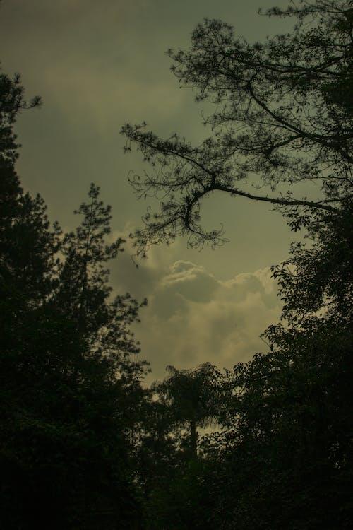 Ilmainen kuvapankkikuva tunnisteilla kontrasti, pilvi, puu, tumma