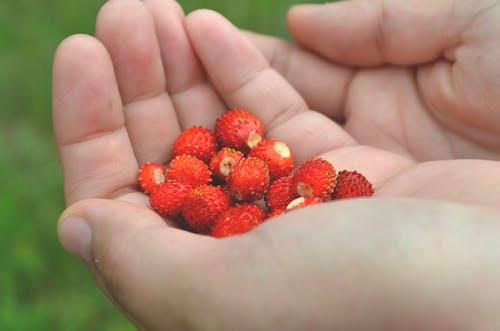 人間の手のひらに赤い丸い果実