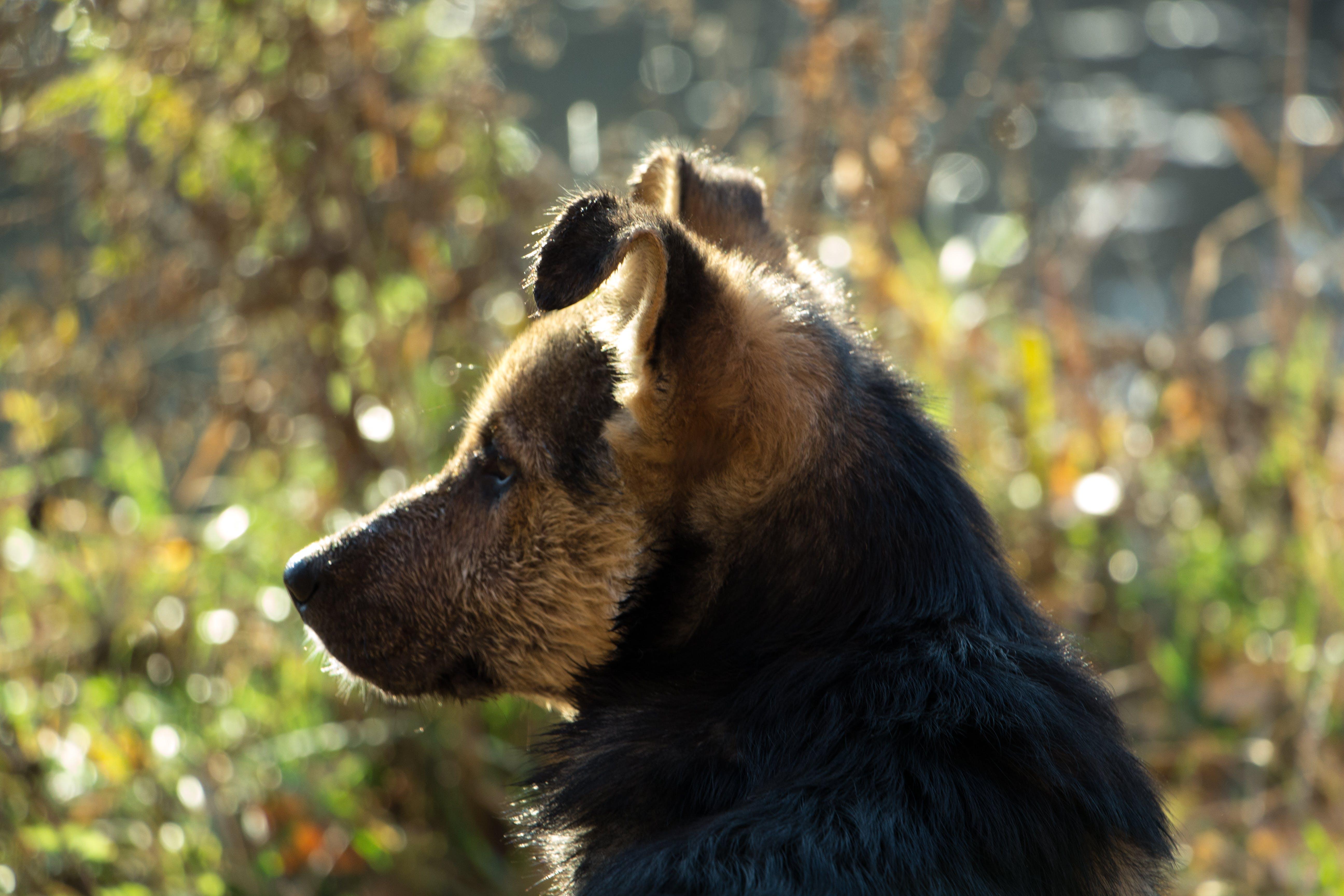 Kostenloses Stock Foto zu freund, hund, köter, mischling