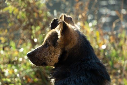 Fotobanka sbezplatnými fotkami na tému bočný pohľad, kríženec, pes, priateľ