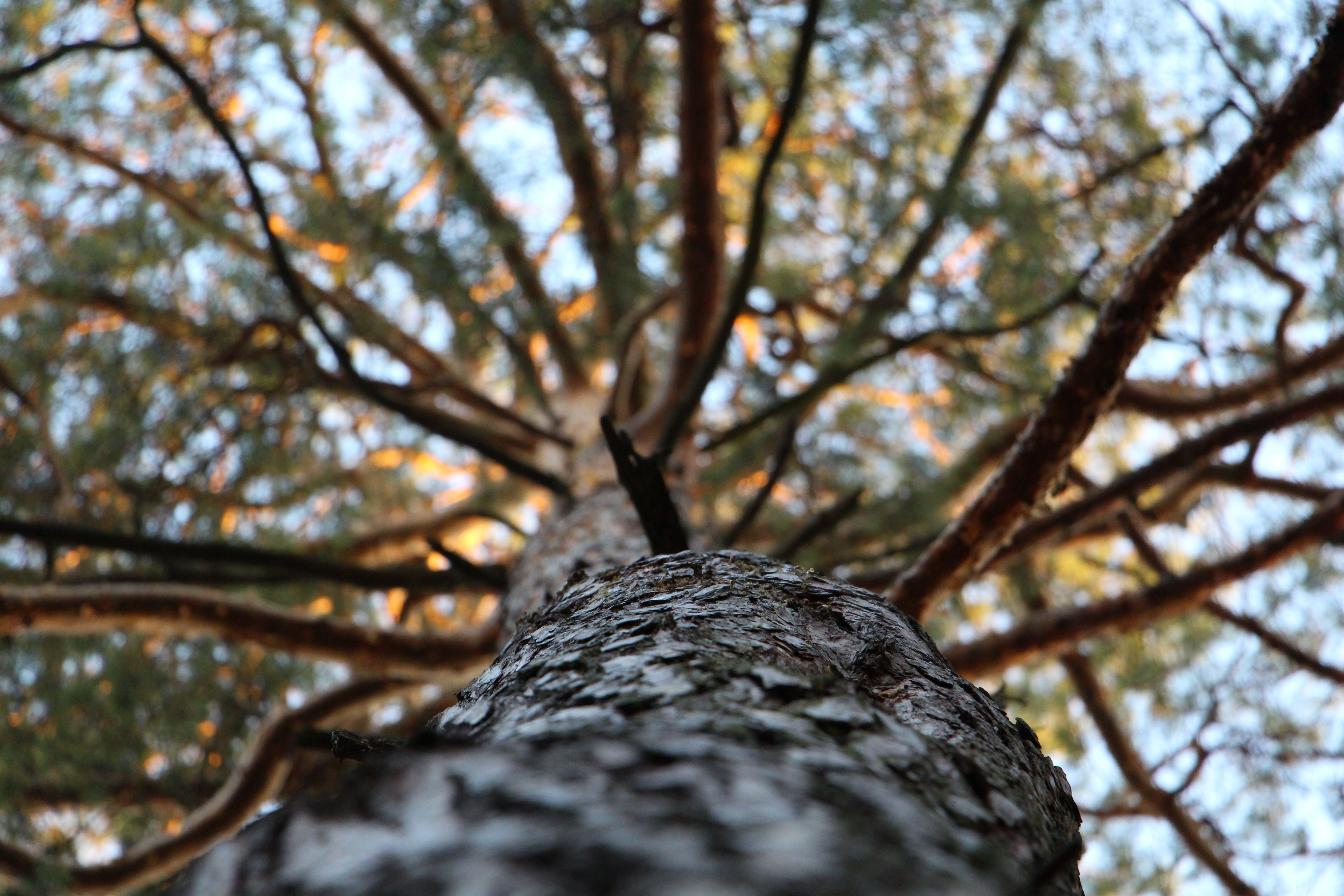 Foto profissional grátis de árvore, casca, filiais, natureza