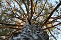 nature, branches, tree