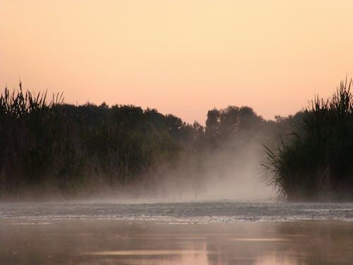 Fotobanka sbezplatnými fotkami na tému hmla, obloha, príroda, stromy