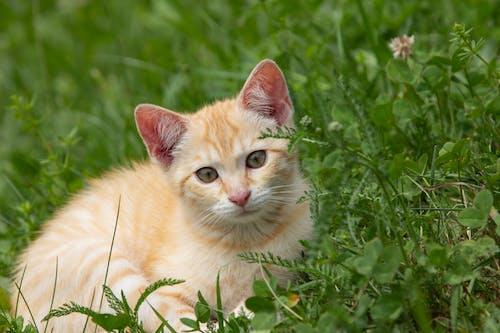 Close-Up Photo of an Orange Tabby Kitten on the Grass